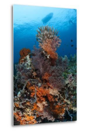 Colorful Crinoids and Soft Corals Adorn a Reef in Raja Ampat--Metal Print