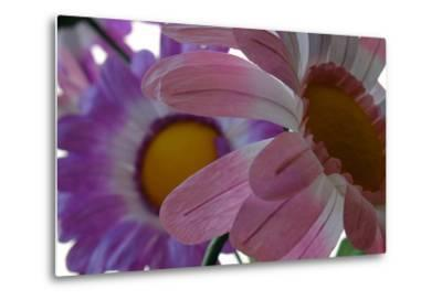 A Close Up View of Two Silk Flowers-Paul Damien-Metal Print