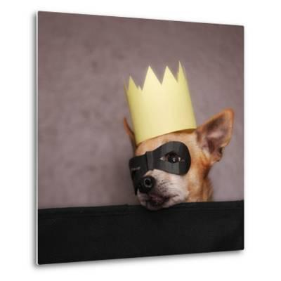 A Cute Chihuahua With A Crown And Mask On-graphicphoto-Metal Print