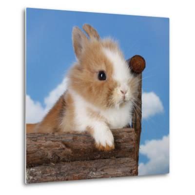 Rabbit Baby Bunny Outdoor-Richard Peterson-Metal Print