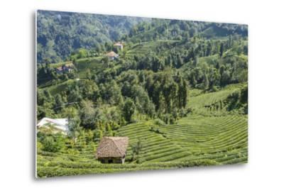 Tea Fields in Rize, Black Sea Region of Turkey-Ali Kabas-Metal Print