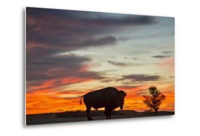 Bison Bull Silhouette, Theodore Roosevelt NP, North Dakota, USA-Chuck Haney-Metal Print