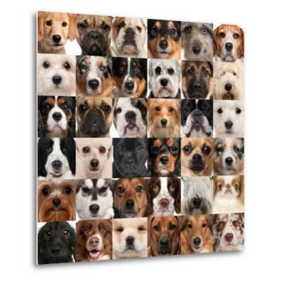 Collage Of 36 Dog Heads-Life on White-Metal Print
