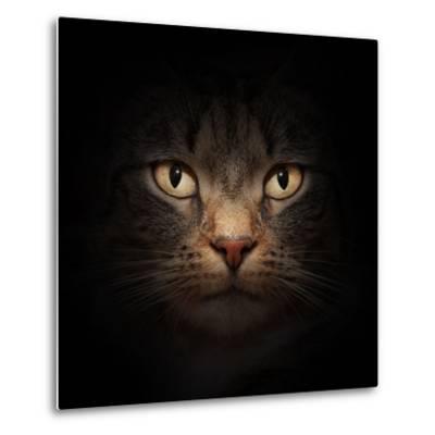 Cat Face With Beautiful Eyes Close Up Portrait-Michal Bednarek-Metal Print