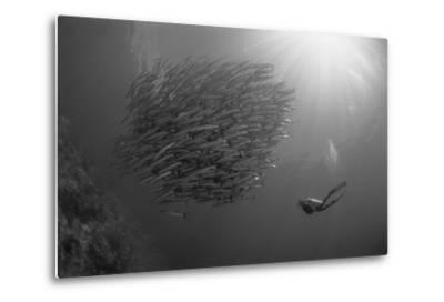 Indonesia, Scuba Diving in Sea-Michele Westmorland-Metal Print