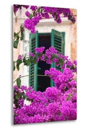 Shuttered Window and Blossom-Frank Fell-Metal Print