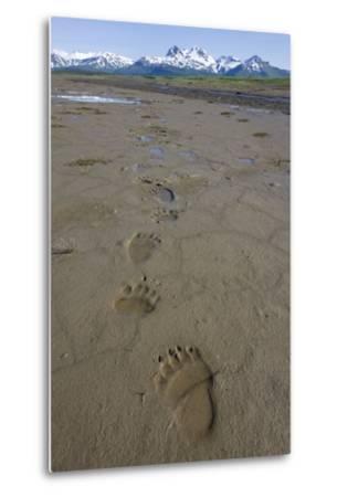 Brown Bear Tracks at Hallo Bay in Katmai National Park-Paul Souders-Metal Print