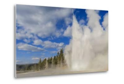 Lone Observer Watches Grand Geyser Erupt, Upper Geyser Basin, Yellowstone National Park-Eleanor Scriven-Metal Print