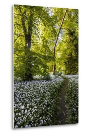 Flowers in a Woods Near Badbury Hill, Oxford, Oxfordshire, England, United Kingdom, Europe-Matthew Williams-Ellis-Metal Print