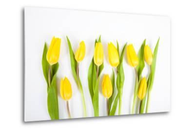 Yellow Tulips-Frank Lukasseck-Metal Print