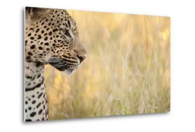 African Leopard-Michele Westmorland-Metal Print