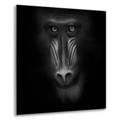 Eye Contact-Ruud Peters-Metal Print