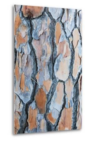 Pine Tree Bark-Frank Lukasseck-Metal Print