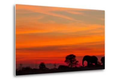 Elephant at Dusk, Nxai Pan National Park, Botswana-Paul Souders-Metal Print