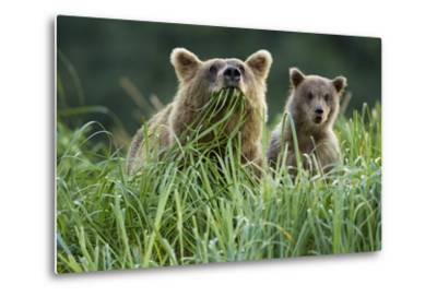 Brown Bear and Cub, Katmai National Park, Alaska-Paul Souders-Metal Print