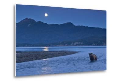 Brown Bear and Full Moon, Katmai National Park, Alaska-Paul Souders-Metal Print
