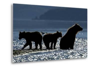 Brown Bear and Cubs, Katmai National Park, Alaska-Paul Souders-Metal Print