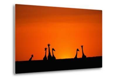 Giraffe Silhouettes at Sunset-Paul Souders-Metal Print