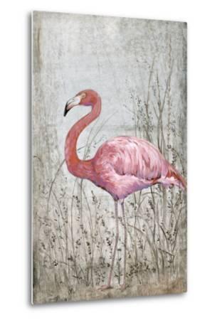 American Flamingo II-Tim O'toole-Metal Print