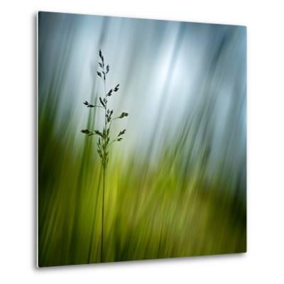 Morning Grass-Ursula Abresch-Metal Print