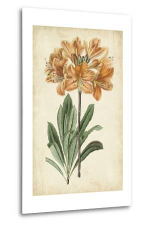 Botanical Display V-Vision Studio-Metal Print