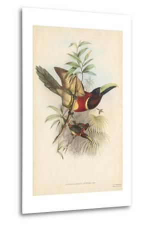 Tropical Toucans III-John Gould-Metal Print