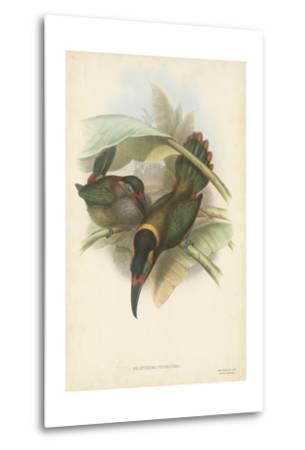 Tropical Toucans VI-John Gould-Metal Print