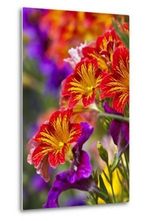 Salpiglossis Flowers in Full Bloom-Terry Eggers-Metal Print
