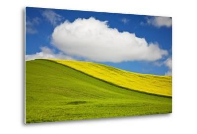 Rolling Hills of Canola and Pea Fields with Fresh Spring Color--Metal Print