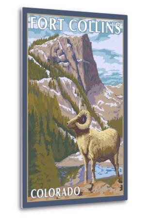 Fort Collins, Colorado - Big Horn Sheep-Lantern Press-Metal Print