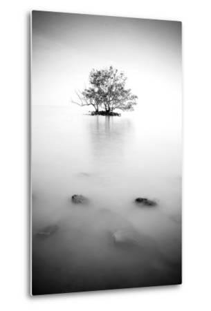 In the Mist--Metal Print