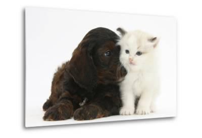 Cockerpoo Puppy and Ragdoll-Cross Kitten-Mark Taylor-Metal Print