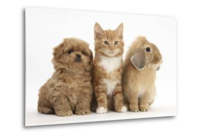 Peekapoo Puppy, Ginger Kitten and Sandy Lop Rabbit-Mark Taylor-Metal Print