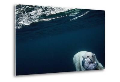 Underwater Polar Bear near Frozen Strait, Nunavut, Canada-Paul Souders-Metal Print
