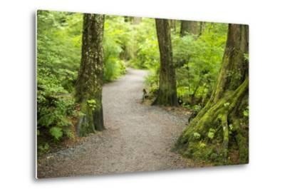 A Graveled Path Through the Woods of the Temperate Rainforest in Sitka, Alaska-Jonathan Kingston-Metal Print
