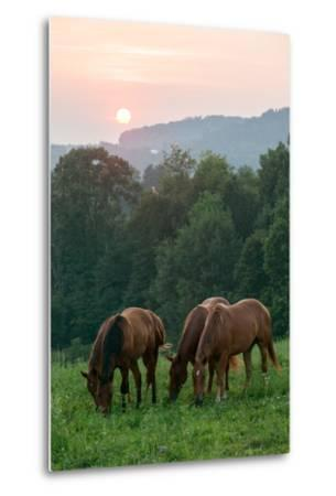 In Rural Hilly Farmland, a Team of Horses Feed on Grass at Sunset-Eric Kruszewski-Metal Print