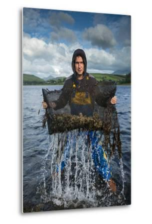 An Oyster Farmer Pulls a Bag of Pacific Oysters Out of the Cold Waters-Jim Richardson-Metal Print