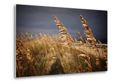 Dune Grasses in Cape Hatteras in North Carolina-Chris Bickford-Metal Print