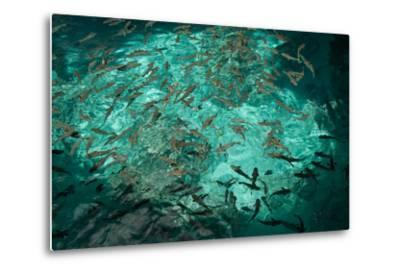 Fish Clustered around a Pier in the Ocean-Karen Kasmauski-Metal Print