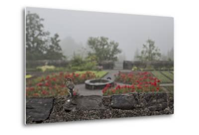 A Bird on a Rock Wall Overlooking an Herb Garden on a Foggy Rainy Day-Ulla Lohmann-Metal Print