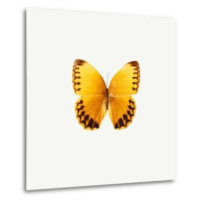Yellow Butterfly-PhotoINC-Metal Print