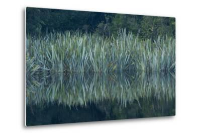Vegetation Rims Lake Matheson in Westland National Park-Michael Melford-Metal Print