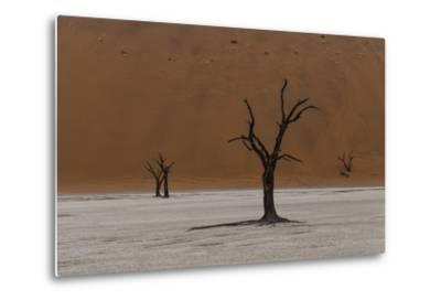 A Surreal Landscape of Dead Trees in a Clay Pan and Towering Sand Dunes-Jonathan Irish-Metal Print