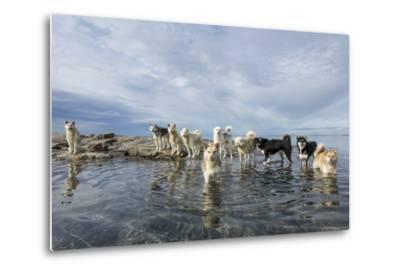 Sled Dogs, Nunavut, Canada-Paul Souders-Metal Print