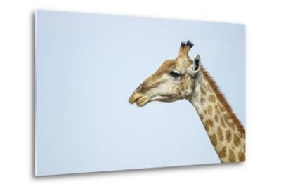Giraffe, Moremi Game Reserve, Botswana-Paul Souders-Metal Print