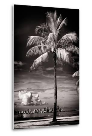 Palm Tree overlooking Downtown Miami - Florida-Philippe Hugonnard-Metal Print