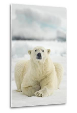Polar Bear, Svalbard, Norway--Metal Print