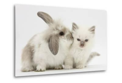 Young Windmill-Eared Rabbit and Matching Kitten-Mark Taylor-Metal Print