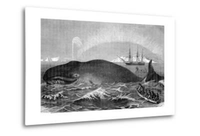 Illustration of Men Attacking Whale with Hand Harpoon--Metal Print
