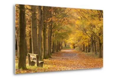 European Beech Trees in Autumn, Beacon Hill Country Park, the National Forest, Leicestershire, UK-Ross Hoddinott-Metal Print